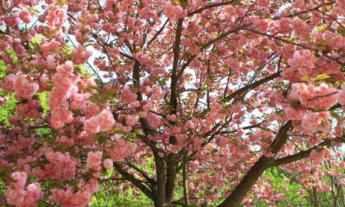 img-bg-iyk-season-festivals-spring